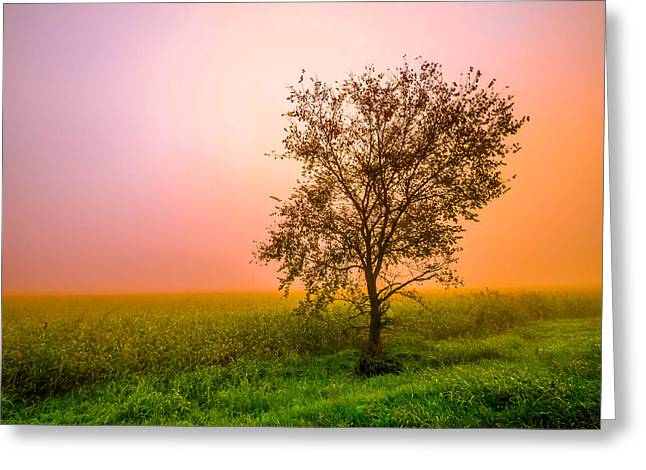 Cornfield Colors Greeting Card by Brian Stevens