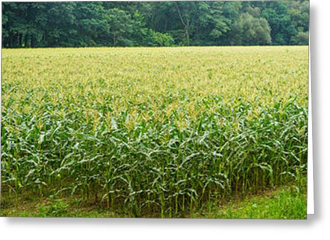Cornfield, Cuyahoga Valley National Greeting Card by Panoramic Images
