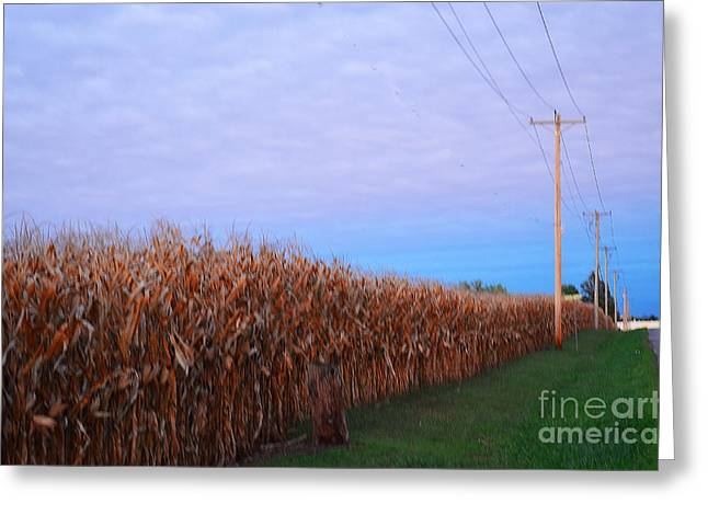 Cornfield In Autumn Greeting Card by Luther Fine Art