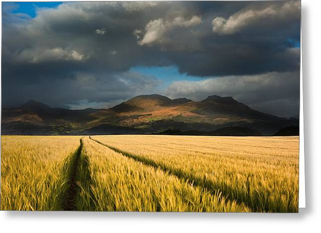 Cornfield Mountains Greeting Card by Matthew Gibson