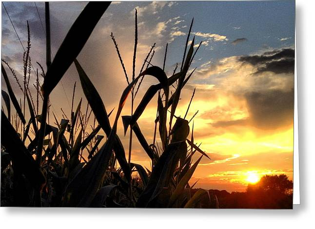 Cornfield Sundown Greeting Card