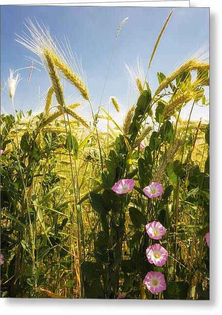 Cornfield With Beautiful Flowers In Summer Greeting Card by Matthias Hauser