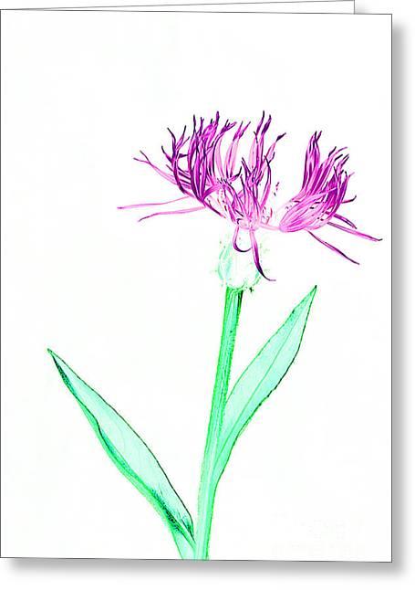 Cornflower No.3 Greeting Card