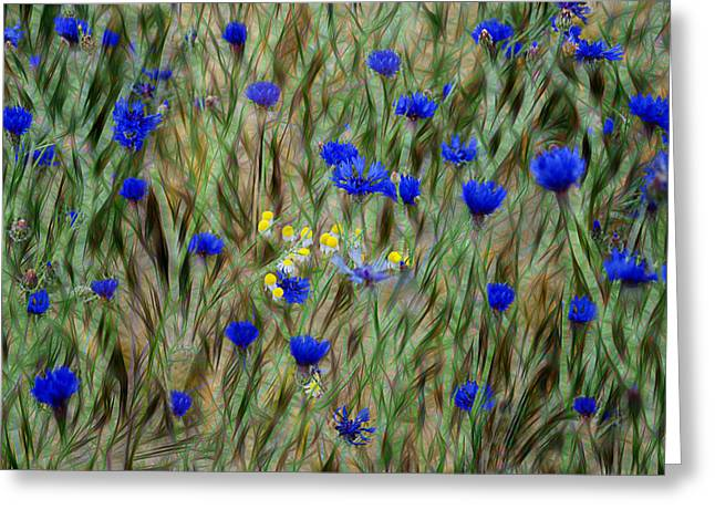 Cornflowers Greeting Card by Joachim G Pinkawa