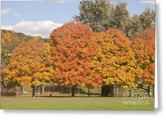 Corning Fall Foliage 1 Greeting Card