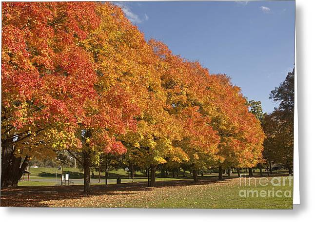 Corning Fall Foliage 2 Greeting Card
