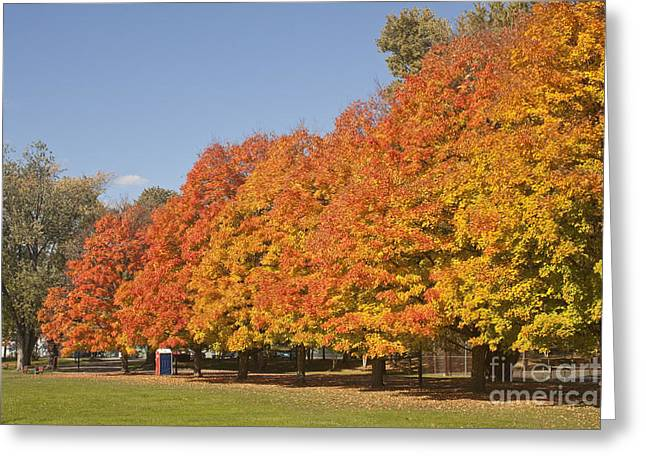 Corning Fall Foliage 3 Greeting Card