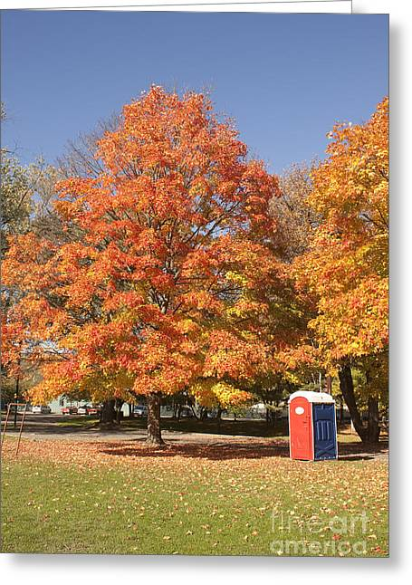 Corning Fall Foliage - 4 Greeting Card