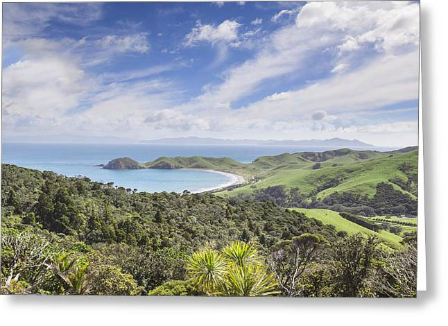 Coromandel Port Jackson New Zealand Greeting Card by Colin and Linda McKie