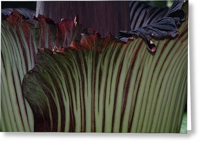 Greeting Card featuring the photograph Corpse Flower Detail 1 by Sheila Byers