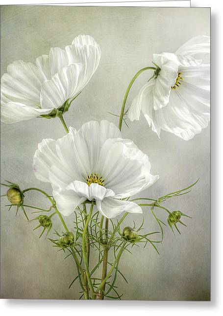 Cosmos Charm Greeting Card by Mandy Disher