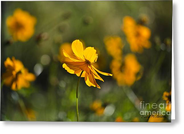 Cosmos Greeting Card by Dave Gordon