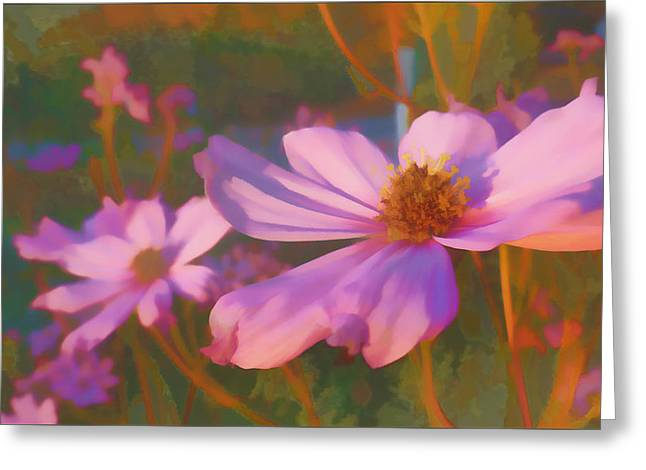 Cosmos Twilight Greeting Card