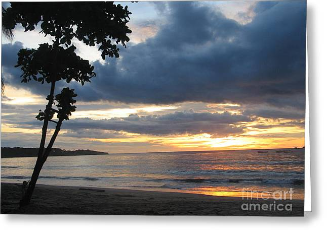 Greeting Card featuring the photograph Costa Rica Palm Sunset - Seascape by Shelia Kempf