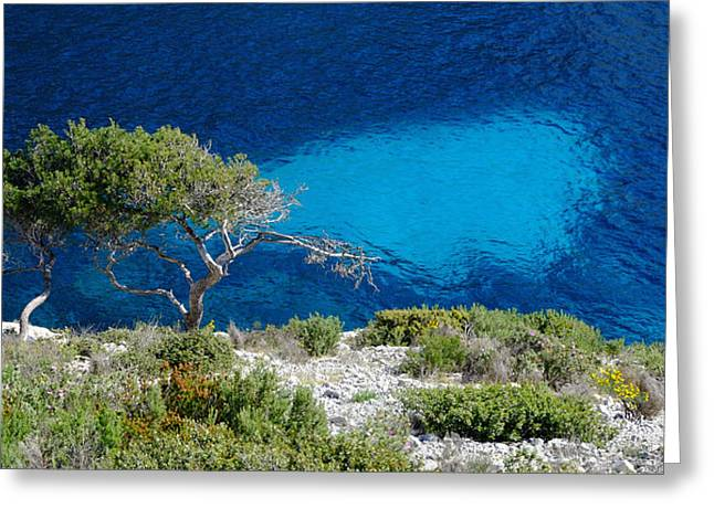 Pine Trees At Azure Waters Greeting Card