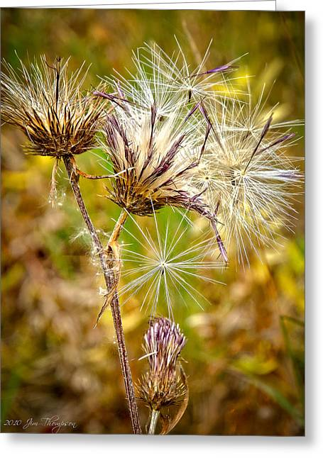 Greeting Card featuring the photograph Cotten Grass by Jim Thompson
