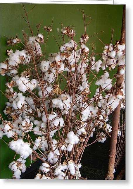 Cotton Display Greeting Card by Warren Thompson