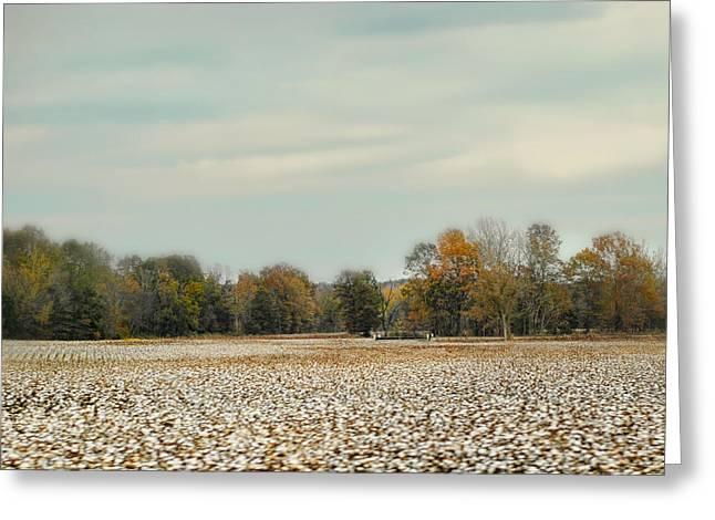 Cotton Field In Autumn - Rural Fall Scene Greeting Card by Jai Johnson