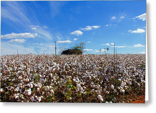 Greeting Card featuring the photograph Cotton Field Under Cotton Clouds by Andy Lawless