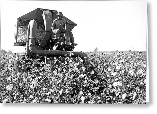 Cotton Picker In Action Greeting Card