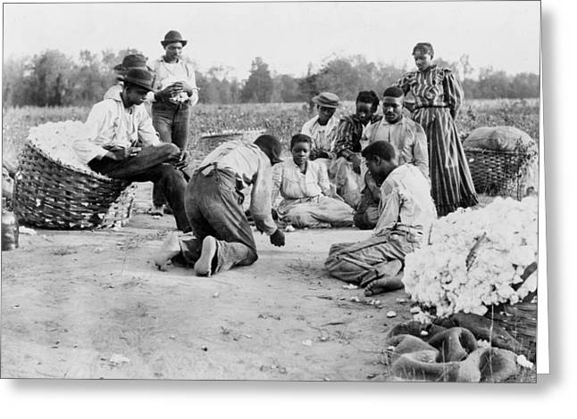 Cotton Pickers, 1900 Greeting Card by Granger