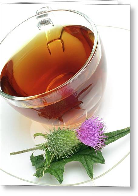 Cotton Thistle Herbal Tea Greeting Card by Bildagentur-online/th Foto/science Photo Library