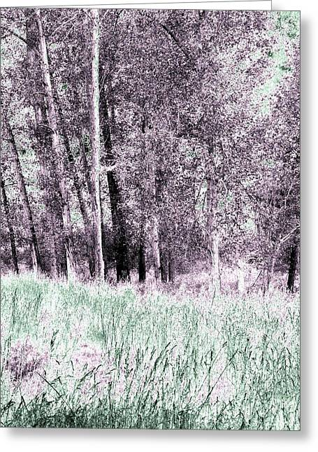 Cotton Trees And Meadow Greeting Card by Will Borden