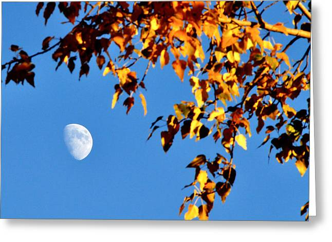 Cottonwood Moon Greeting Card