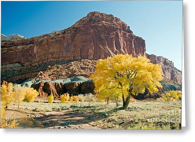Cottonwoods In Fall The Castlecapitol Reef National Park Greeting Card