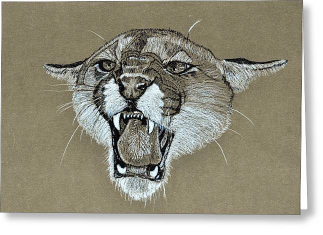 Cougar 1 Greeting Card by David McDowell