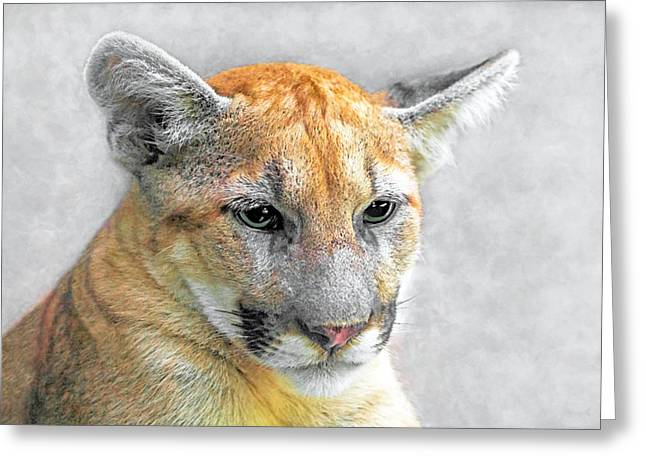 Greeting Card featuring the photograph Cougar by Marion Johnson