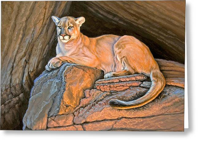 Cougar Greeting Card by Paul Krapf
