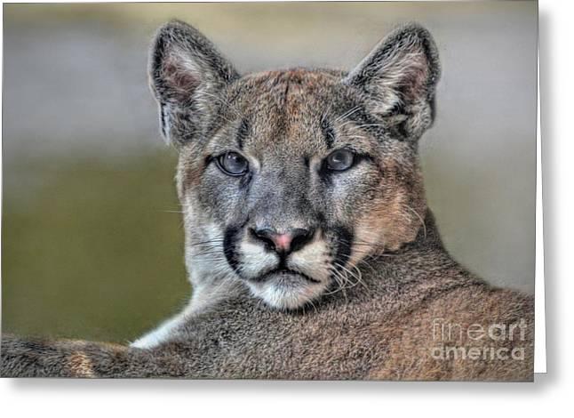 Greeting Card featuring the photograph Cougar  by Savannah Gibbs