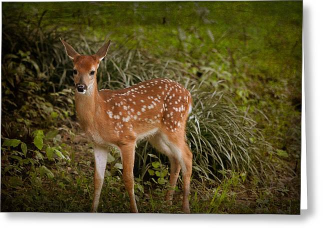 Could It Be Bambi Greeting Card
