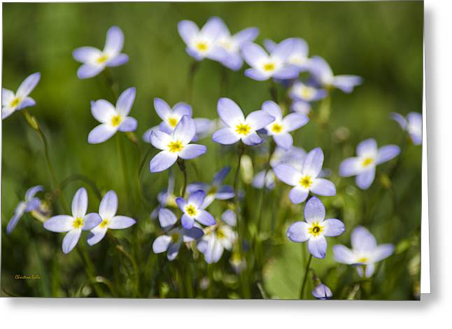 Country Bluet Flowers Greeting Card