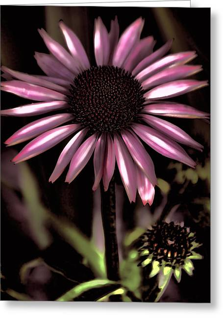 Country Coneflower Art Greeting Card