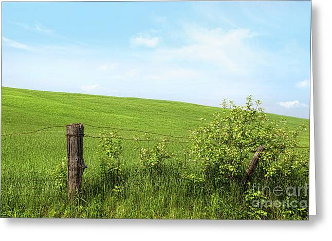 Country Fence With Flowers With Blue Sky Greeting Card by Sandra Cunningham