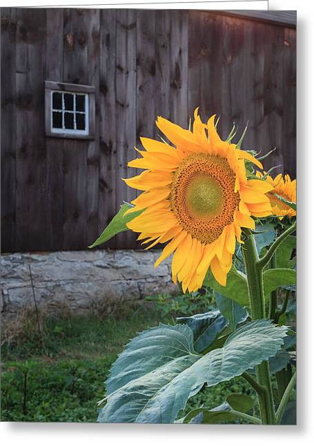Country Flower Greeting Card by Bill Wakeley
