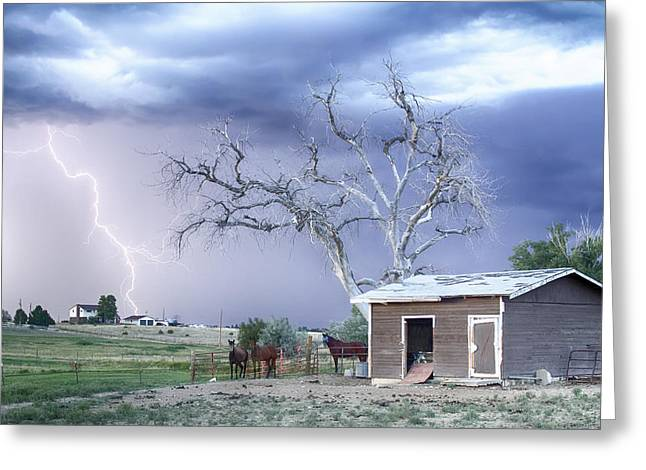 Country Horses Lightning Storm Co   Greeting Card