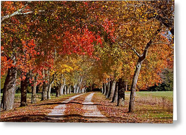 Greeting Card featuring the photograph Country Lane In Autumn by Jerry Gammon