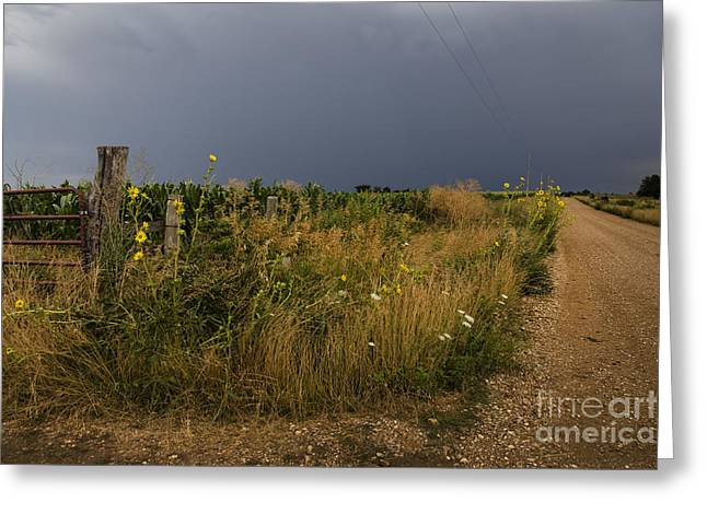Country Road Greeting Card by Dennis Hedberg