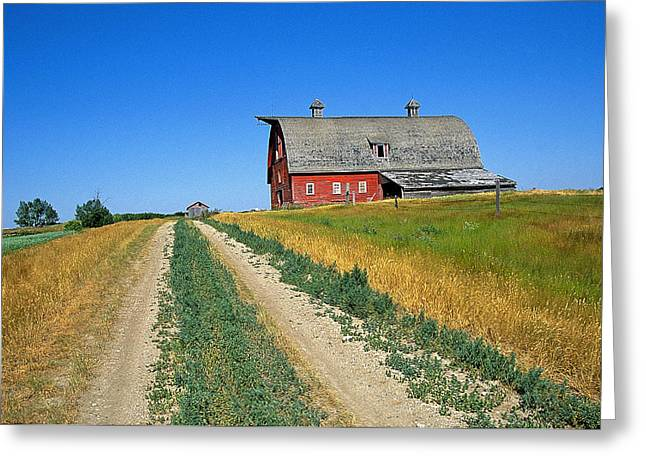 Country Road In Saskatchewan Greeting Card by Buddy Mays