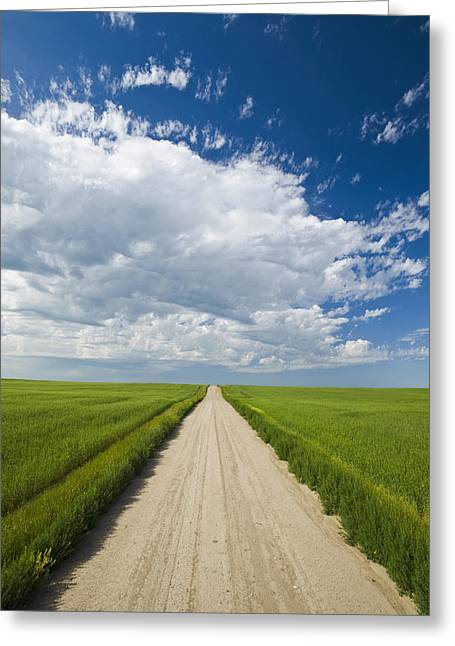Country Road Through Grain Fields Greeting Card by Dave Reede
