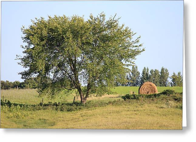 Greeting Card featuring the photograph Country Scene by Penny Meyers