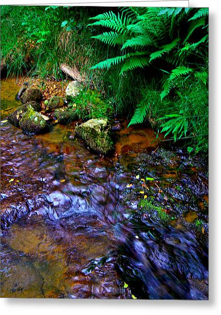 Country Stream Greeting Card