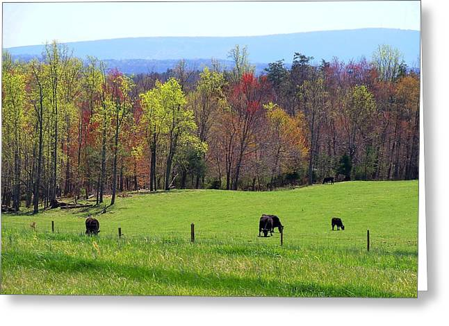 Greeting Card featuring the photograph Countryside In Spring by Kathryn Meyer