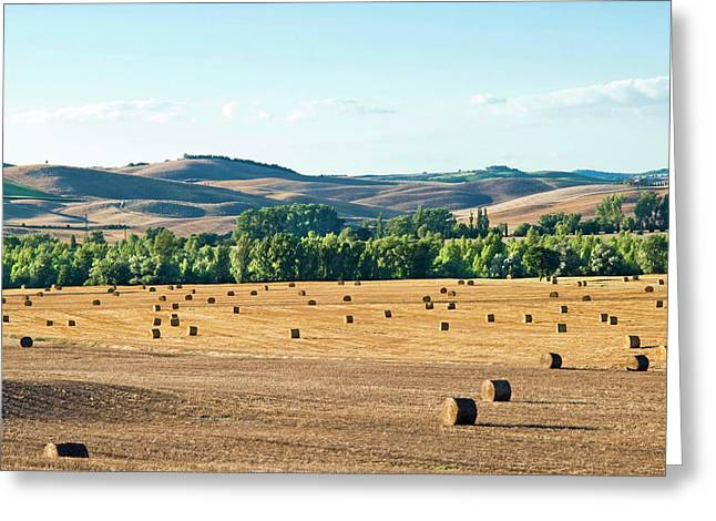 Countryside Near San Qurico D'orcia Greeting Card