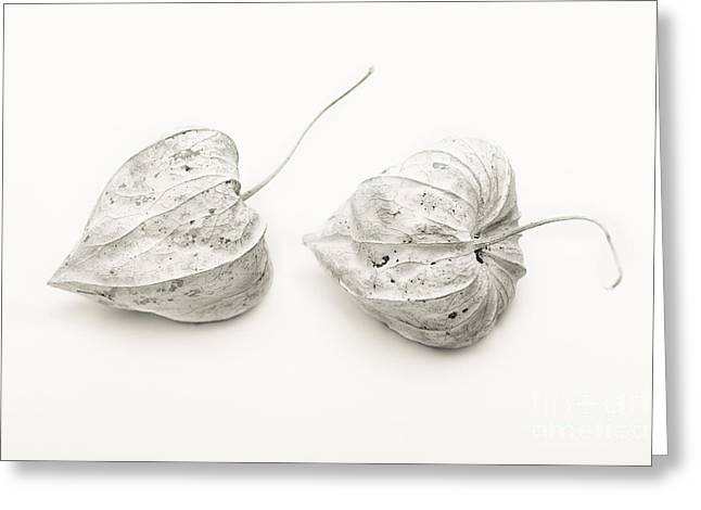 Couple Physalis Greeting Card by Sviatlana Kandybovich