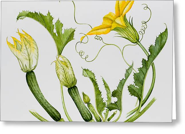 Courgettes Greeting Card by Sally Crosthwaite