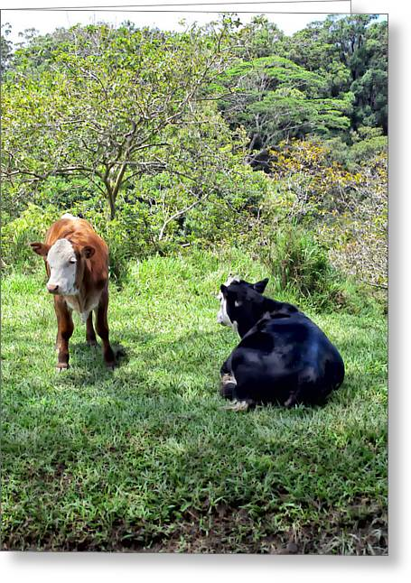 Greeting Card featuring the photograph Cow 4 by Dawn Eshelman